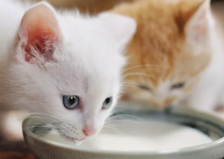 Why Cats Love Milk So Much Pebby