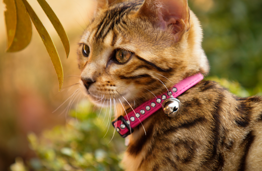 cat gps tracker