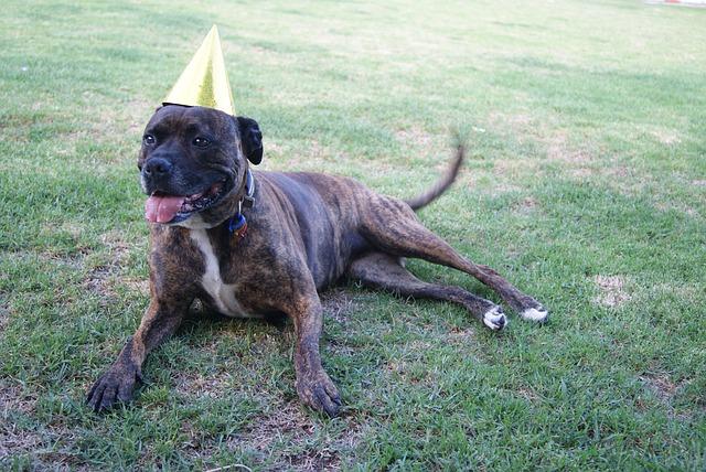 dog birthday guide