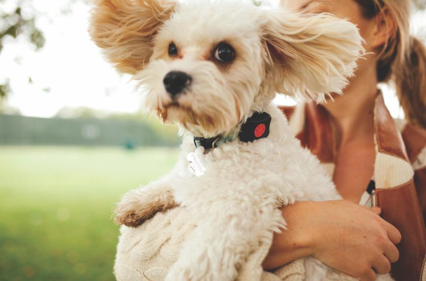 dog tracker