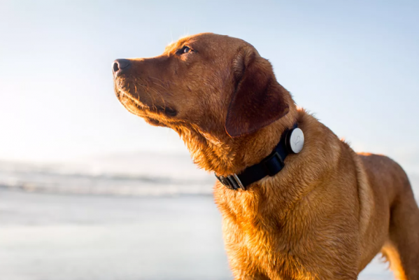dog tracking collar