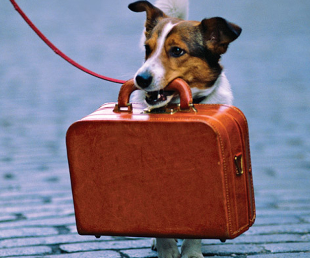 travling with your dog