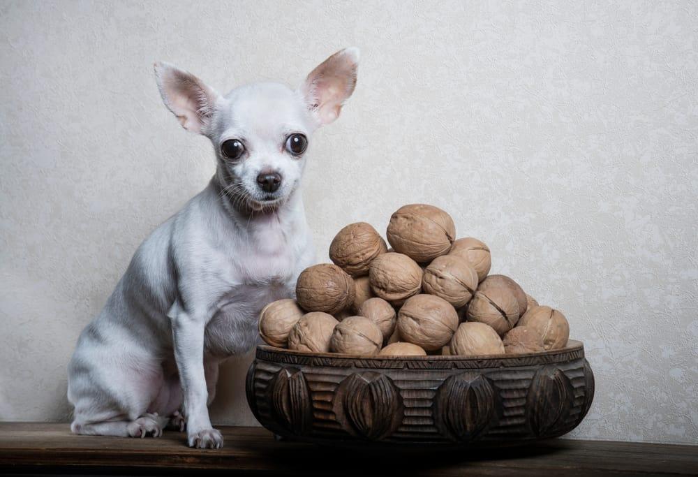 Dog Nuts